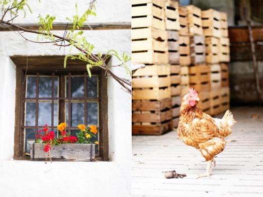 Zuckerzimtundliebe in Südtirol Reiseblog Foodblog Genussfestival Huhn Bauernhof