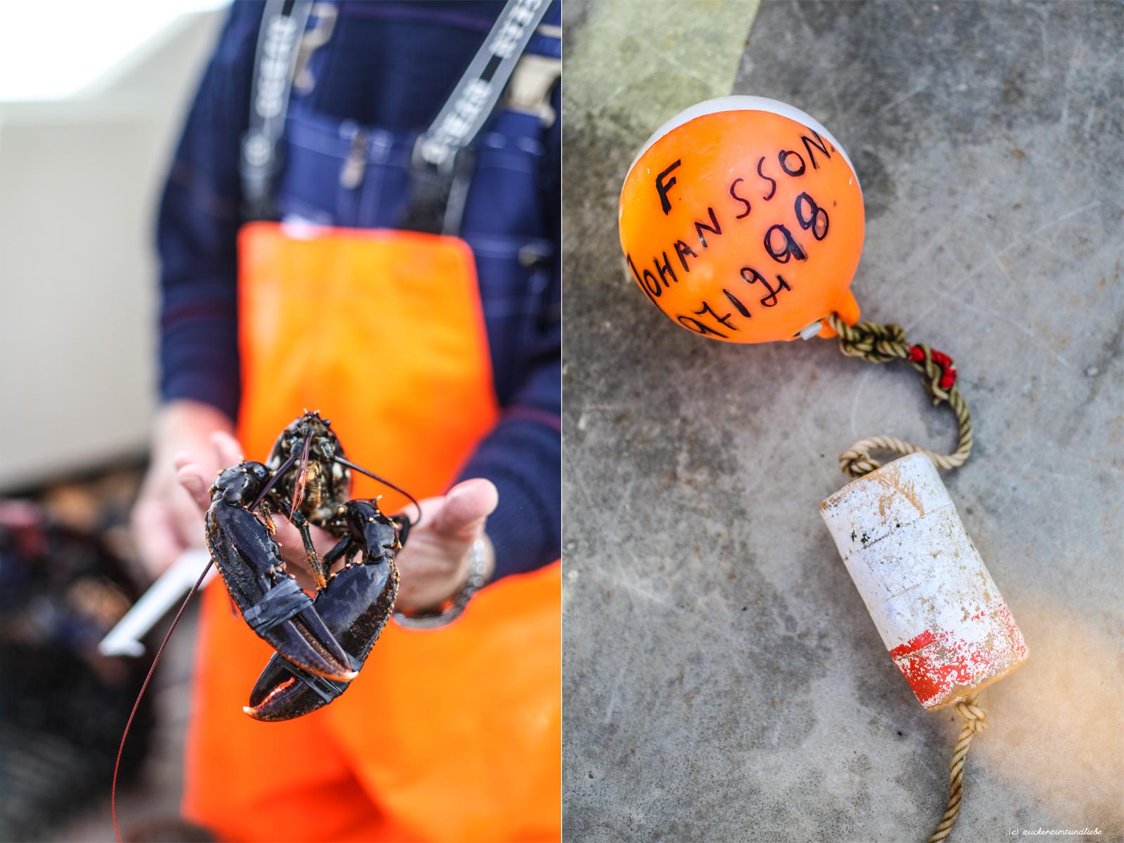 Zuckerzimtundliebe Westschweden Hummer Schalentiersafari Schären Göteborg