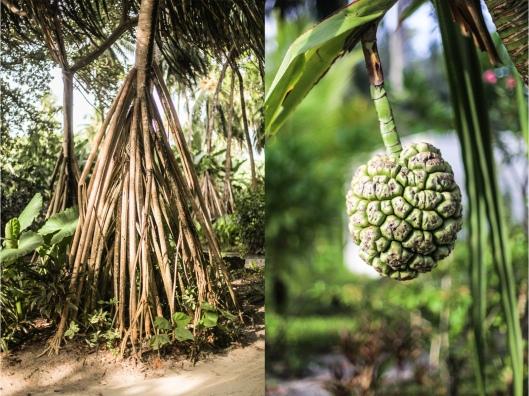 Kuramathi Island Resort Malediven Familienurlaub Indischer Ozean Screw Pine