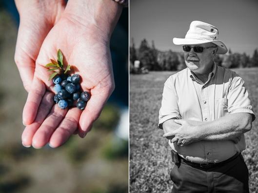 Wilde Blaubeeren Kanada Wild blueberries of Canada Zuckerzimtundliebe kulinarische Reise